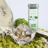 Camellia Sinensis grüner Tee
